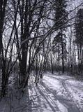 Schatten auf Schnee Stockfotografie