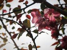 Schatten-Blüten lizenzfreies stockbild