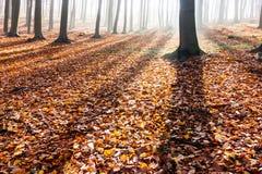 Schatten der Bäume im Herbstwald Stockfotografie