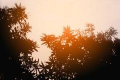 Schatten der Blätter Stockfotografie