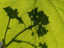 Schatten der Blume lizenzfreie stockfotos