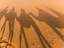 Schatten der Kamele im Sahara Lizenzfreie Stockfotos