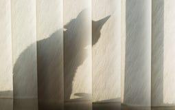 Schatten der Katze auf dem Vorhang Stockfotos