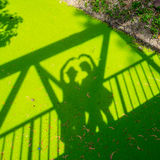 Schatten der Liebe auf grüner Entengrütze Stockfotografie