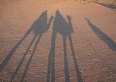 Schatten der Mitfahrer auf Kamelen Lizenzfreie Stockfotos