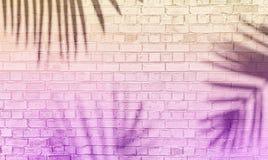 Schatten der Palme auf Backsteinmauer stockbilder