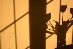Schatten der Tulpeblumen auf Wand Stockfotografie