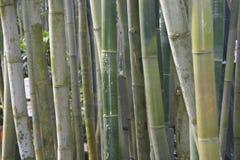 Schatten des Bambusses Lizenzfreies Stockbild