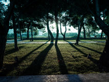 Schatten des Baums Stockfoto