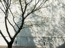 Schatten des Baums Stockbild