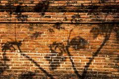 Schatten des Baums auf der alten Backsteinmauer Stockbild
