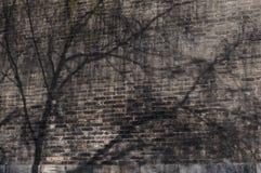 Schatten des Frühlinges Lizenzfreies Stockbild