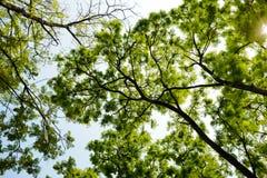Schatten des grünen Blattes Stockbilder
