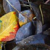 Schatten des Herbstzerfalls Stockbilder