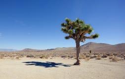 Schatten des Joshua-Baums Lizenzfreies Stockfoto