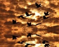Schatten des Kormoranvogels Lizenzfreie Stockfotografie