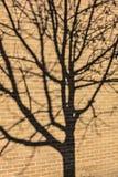 Schatten eines Baums auf einem Backsteinbau Stockbilder