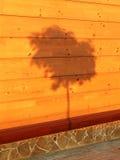 Schatten eines Baums auf einer hölzernen Wand Lizenzfreies Stockbild