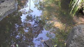 Schatten im Himmel reflektierten sich in West-Ithaca-Nebenfluss stock video