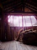 Schatten im Stall lizenzfreie stockfotos