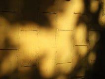 Schatten und Betrachtung Lizenzfreie Stockfotografie