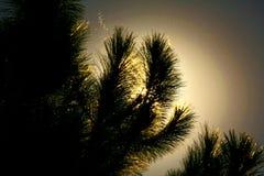 Schatten und Zeichen der Natur stockfoto