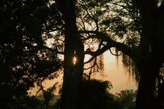 Schatten und Zeichen der Natur lizenzfreie stockbilder
