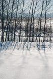 Schatten von Bäumen auf Schnee Stockbilder