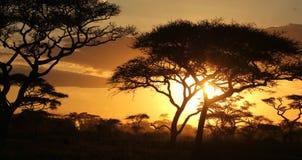 Schatten von Bäumen vor Sonnenuntergang auf der afrikanischen Savanne stockbilder