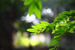 Schatten von Blättern Stockfotografie