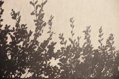 Schatten von Blättern auf Segeltuch Stockfotos