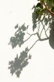 Schatten von Blumen Stockfotografie