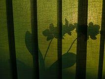Schatten von Blumen Stockfotos