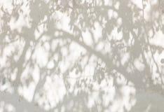 Schatten von den Bäumen auf einer vergipsten Wand Stockbilder