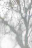 Schatten von den Bäumen auf einer vergipsten Wand Lizenzfreie Stockfotos