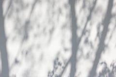 Schatten von den Bäumen auf einer vergipsten Wand Lizenzfreie Stockbilder
