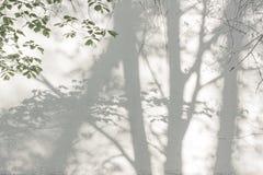 Schatten von den Bäumen auf einer vergipsten Wand Lizenzfreie Stockfotografie