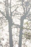 Schatten von den Bäumen auf einer vergipsten Wand Stockfotos