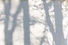 Schatten von den Bäumen auf einer vergipsten Wand Stockbild