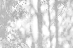 Schatten von den Blättern nachgedacht über die weiße Wand Stockfotografie
