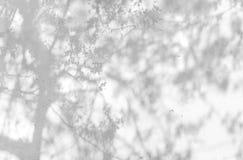 Schatten von den Blättern nachgedacht über die weiße Wand Lizenzfreie Stockbilder