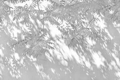 Schatten von den Blättern nachgedacht über die weiße Wand Stockbilder