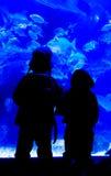 Schatten von den Kindern, die ein Aquarium untersuchen lizenzfreies stockfoto
