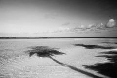 Schatten von den Palmen auf dem Strand Stockfotografie