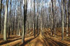 Schatten von der Sonne im Herbstwald Lizenzfreie Stockfotografie
