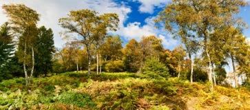 Schatten von Farben im Wald im Herbst stockbild