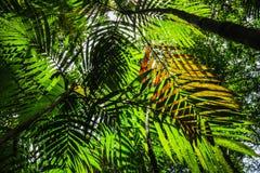 Schatten von Palmblättern Stockbilder