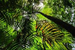 Schatten von Palmblättern Stockfoto