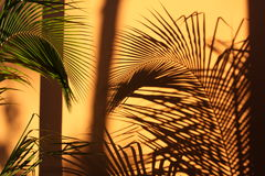 Schatten von Palmen auf der Wand im Sonnenuntergang Stockbild