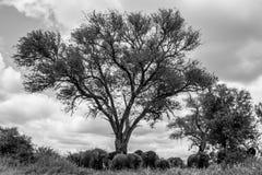 Schattenbaum Stockbilder
